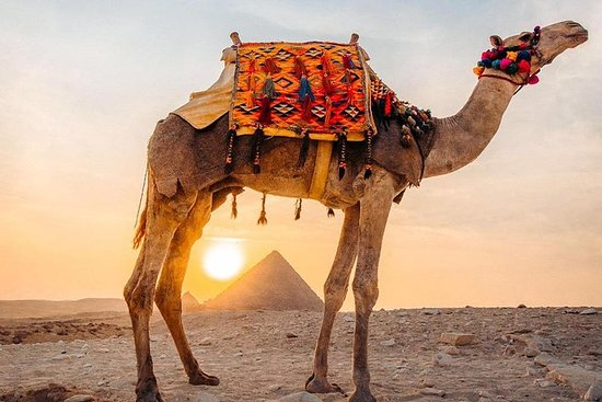 Cairo tour / Full day tour to Giza...