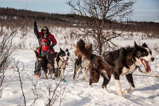 Tromso: Husky Sledding Self-Drive Adventure