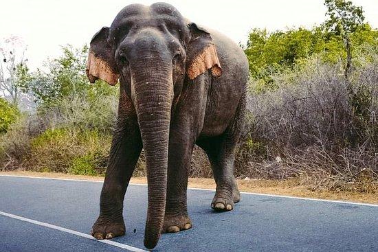 Tour de 9 jours de l'aventure et de la faune au Sri Lanka