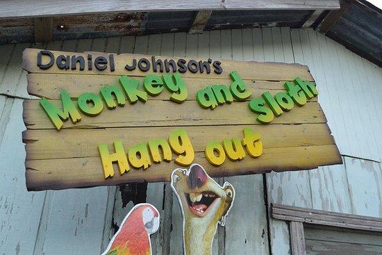 Daniel Johnsons Monkey & Sloth Hang...