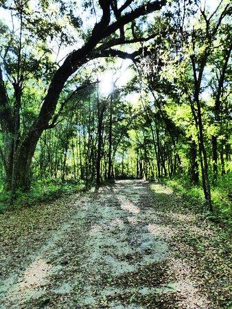 A random trail shot.