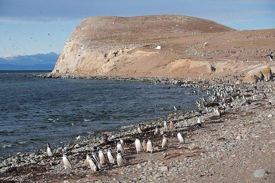 Excursión con pingüinos en Isla...
