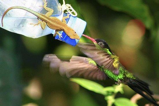 Rockland Bird Sanctuary and Hip-Strip...