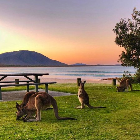 Diamond Head campground, Kylies Beach and Indian Head campgrounds have reopened within Crowdy Bay National Park 🌳🦘 These are wonderful locations for a quick getaway or a week long escape to the sounds and sights of nature. ⚠️ Head to NSW National Parks and Wildlife Service website to check for alerts BEFORE heading into any National Parks in the Barrington Coast area: http://bit.ly/crowdyalerts 📸 instagram.com/ami_9 #barringtoncoast #manningvalley #crowdybaynationalpark