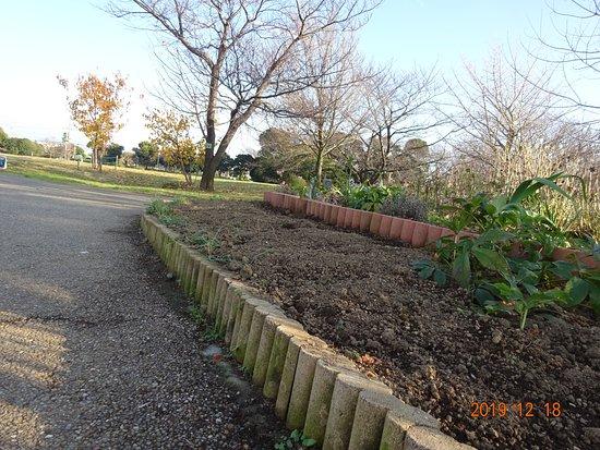 この公園美化ボランテイア団体は、自分達の花壇だけ美化する活動をやっています。公園全体を全く考えていません。住宅街にある公園だと言うことを、全く理解していません。  周囲との調和、水の怖さ、土の大切さを知っている、経験と常識のある公園美化ボランテイアは、こんな花壇は作らないと思います。こんな公園は作りません。  でも、この公園美化ボランテイア代表は、自然環境まで、浦安市全体、日本全国、地球規模で考えていると、市民には言っています。口だけじゃなく、実行して欲しい。。。   さすが、掃除をやらない公園美化ボランテイアだ。やることが違うと、感心しています。