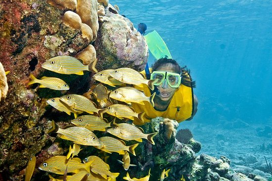 Mayan Adventure Snorkeling Tour from Playa del Carmen or Riviera Maya صورة فوتوغرافية