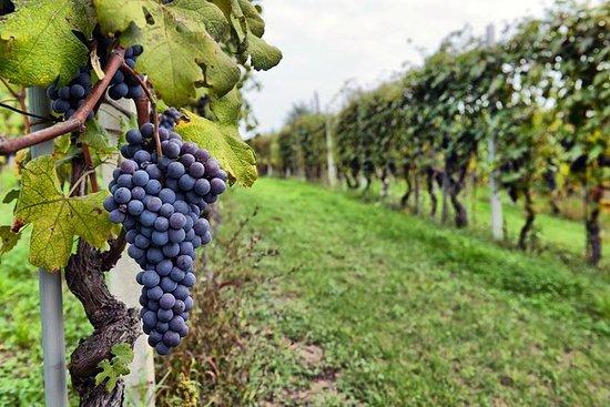 Lille gruppe halvdags Sonoma Wine...