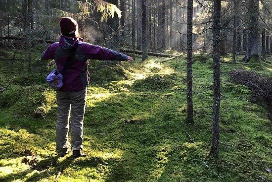 バックパッカーヘルシンキツアーで国立公園のハイキング体験