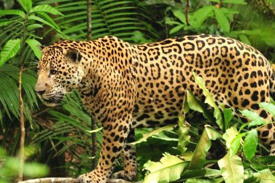 亚马逊Manu丛林之旅4天