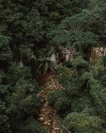 Over the jungle