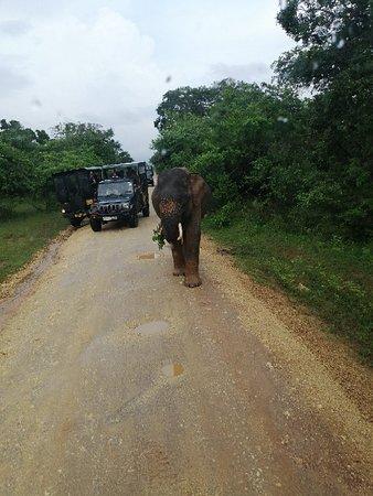 "The dust on my Boots the rhythm of my feat and my heartbeat says  ""Sri Lanka"". - - @Yala National Park Safari #wildlife #safari"