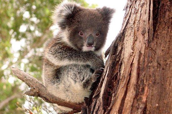 Kangaroo Island Luxury Small Group 'Island Life' heldagstur