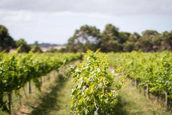 Tour de medio día de vino y cerveza en Phillip Island