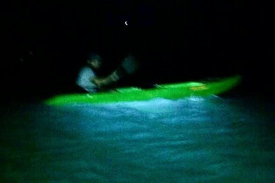 Bioluminescent Bay Kayak Trip
