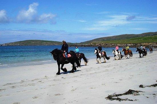 Excursion à terre: Équitation guidée...
