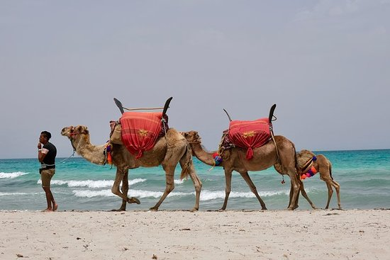 "From Djerba: 1 day in the footsteps of Star Wars ""Mos Eisley"""
