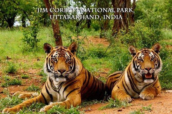 Von Delhi: Private Jim Corbett...
