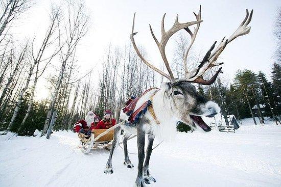 Tour privato alla fattoria delle renne a Rovaniemi