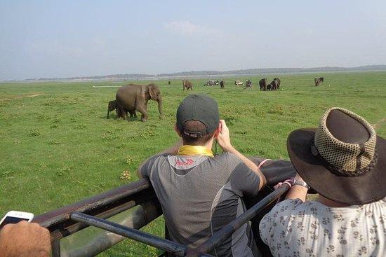 Safari d'une demi-journée au parc...