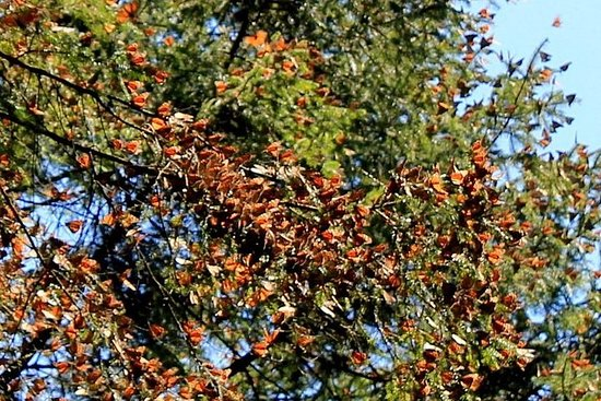 Private Monarch Butterfly Sanctuary Tour from Mexico City