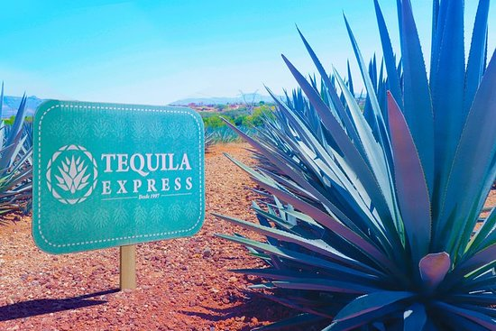 Tour Tequila Express