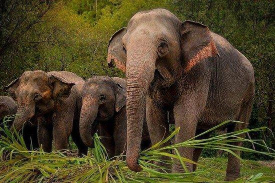 Aus Bangkok: Tagesausflug zum Elefanten-Dschungel-Schutzgebiet