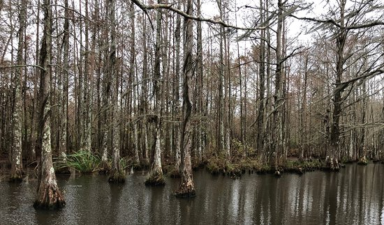 On the bayou off the Pearl River.