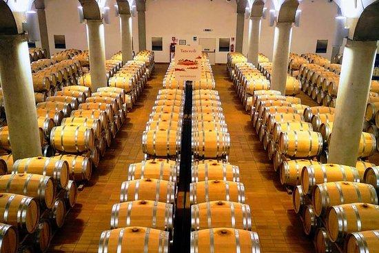 Cata de vinos en la bodega, centro...