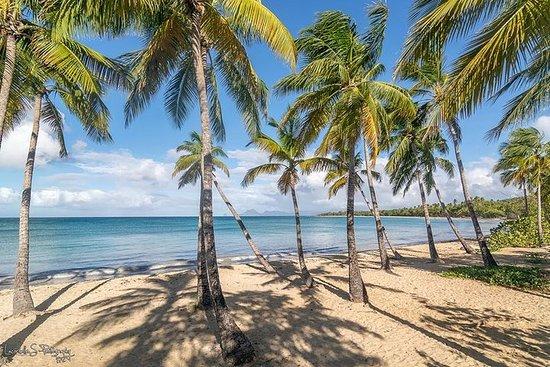 BEACHCOMBING IN PARADISE-Sud Caraïbes...