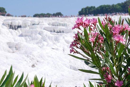 塞尔丘克的棉花堡一日游