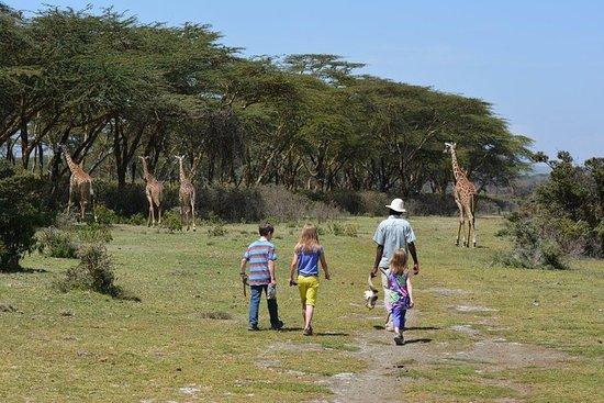 Lake Naivasha Walking with Animals Day