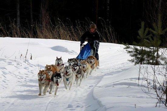 Traîneau à chiens près de Moscou