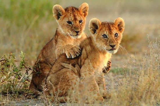 Safari de 3 dias do Kruger Explorer a...