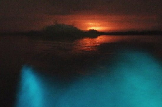 Tour bioluminiscente de noche