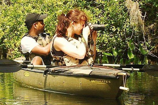 Mangroventunnel: Öko-Tour im Kajak