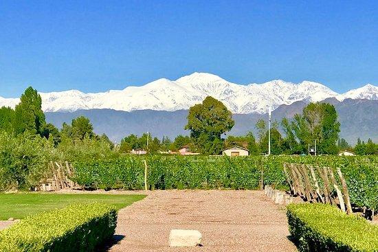 Half Day Private WineTour, Lujan de Cuyo