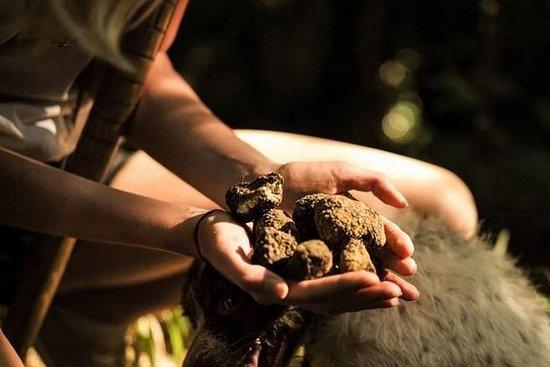 Cretan Truffle Hunting & Authentic...