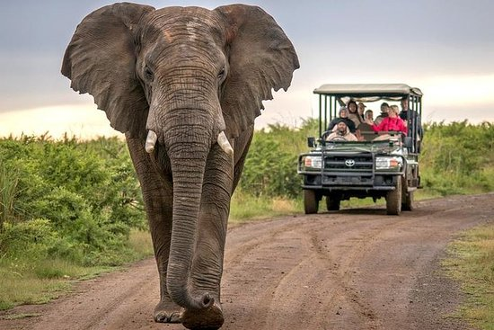 5-dagers Private Garden Route Tour fra Cape Town inkludert Addo...