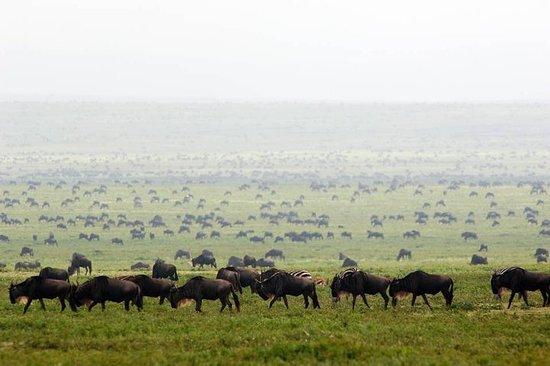04 dage (Lake Manyara, Serengeti & Ngorongoro Crater)-billede