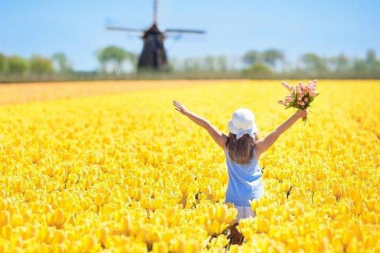 Tour met tulpenvelden, windmolens en lokale ervaringen