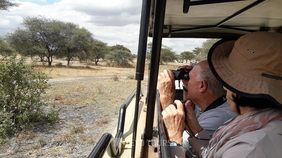 Travellers traveling with Leyu Tours enjoying their day trip in Tarangire National Park. We give priority to customer satisfaction - Book with us for your next safari . Email: adventure@leyutours.com | WhatsApp: +255784063026