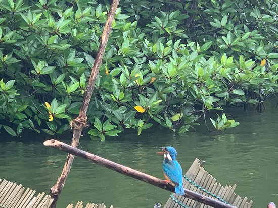Mangrove Boat Tour: Boat tour