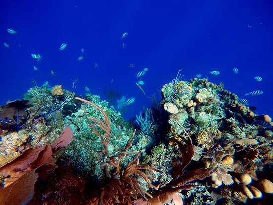 Roatan Barrier Reef Snorkel and...
