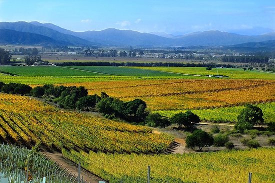 Casablanca Valley Weinprobe mit 4...