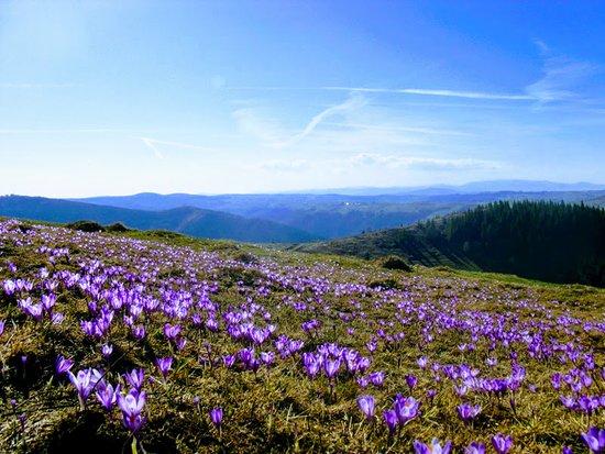 Spring came in Apuseni Mountains