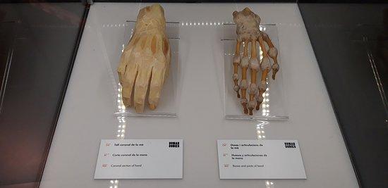 Exposición Human Bodies. Anatomía de la vida