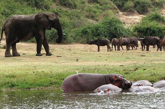 Safari di 2 giorni al Queen Elizabeth