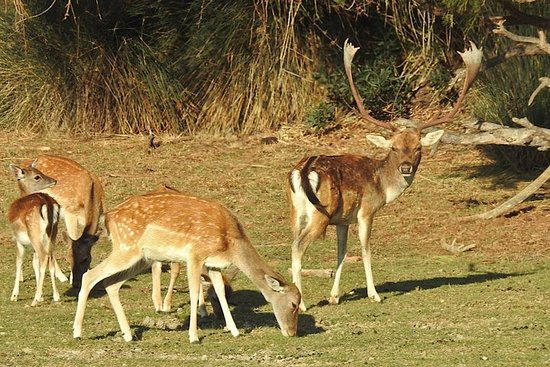 Parc national Doñana de Séville...