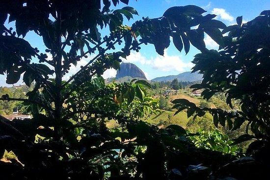 Guatape & Coffee Farm & Exotic Fruit...