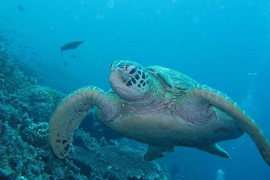 PADI Discover Scuba Diving au parc...